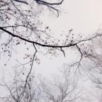 The hidden stories of trees