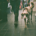 Pups on 35mm