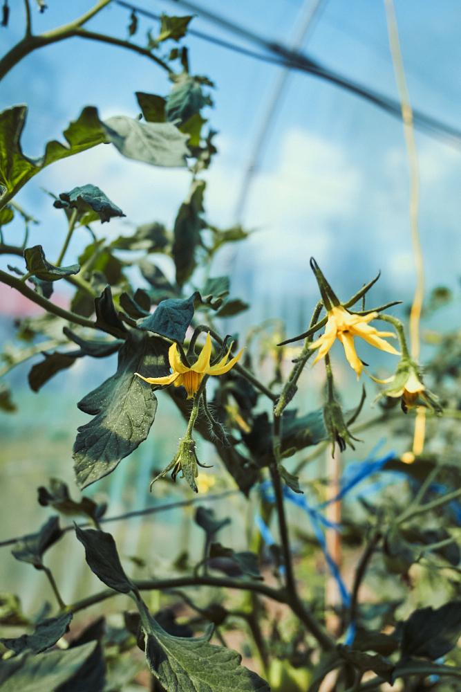 greenhouse, ioana birdu